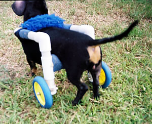 Dahlia in Cart Rear Vew